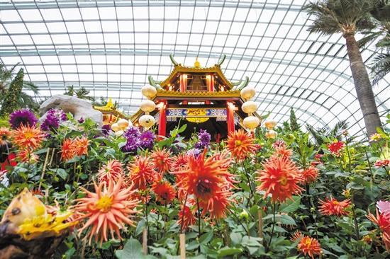 """新年去新加坡旅游一定要去看""""大丽花之梦""""花卉展"""