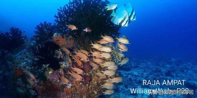 印尼的这个海岛,比巴厘岛更令人倾心,比马代更适合潜水...