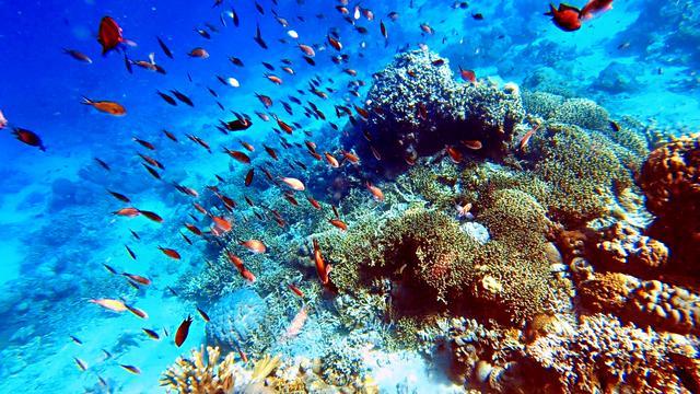 """""""精彩印尼""""不止巴厘岛!印尼旅游推介会在无锡举行"""