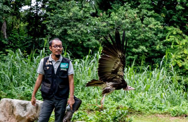 图虫人文摄影:新加坡飞禽公园