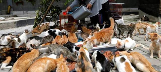 点赞!印尼女子收养250只残疾病猫,雇5人每天打扫房屋