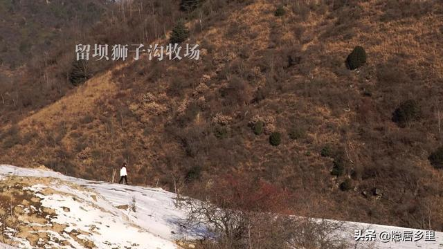 大秦岭的小日子丨冬韵