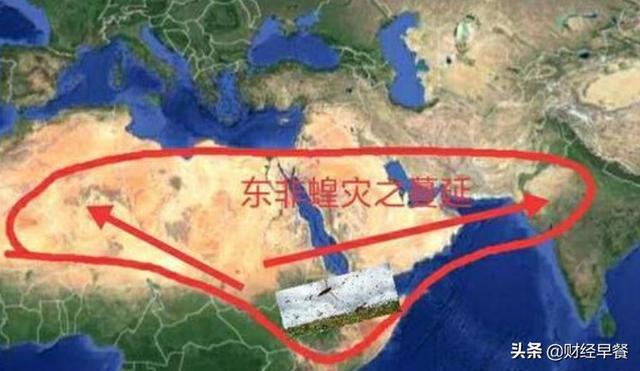 入侵亚洲、灭绝庄稼,70年一遇的非洲蝗灾,让两千万人面临断粮