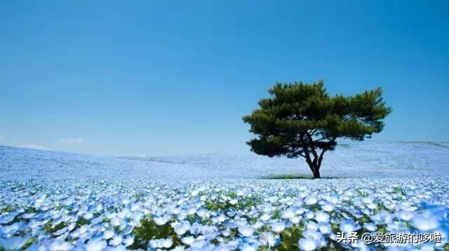 想陪你去看最美花海