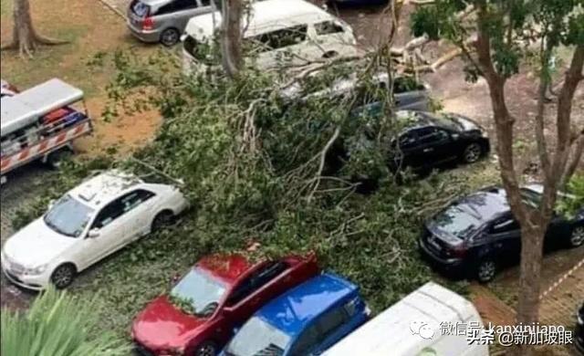 新加坡组屋楼下,6层楼高大树倒塌,挡风玻璃全碎