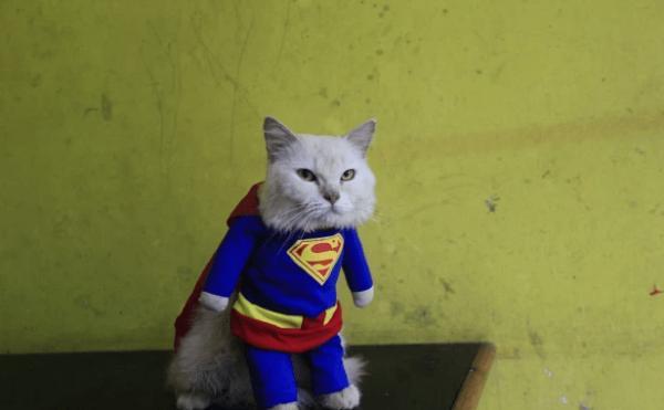 印尼设计师给猫设计超级英雄款服装