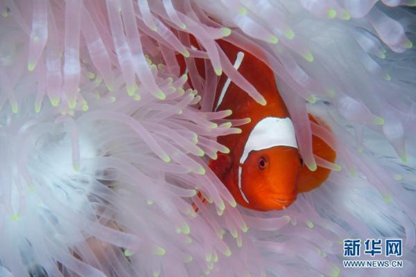 印尼:丰富多彩的海洋世界