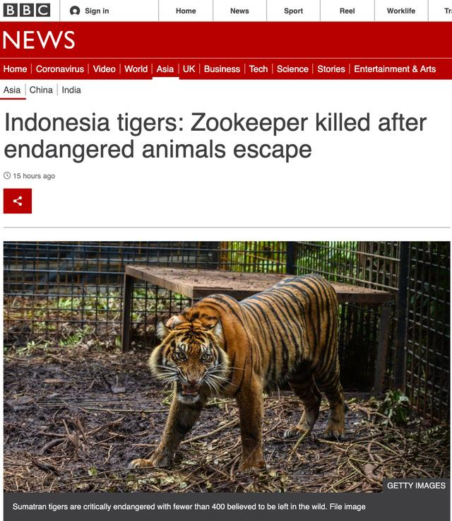 """印尼两只极度濒危老虎咬死饲养员""""越狱"""":一只被捉,一只被杀"""