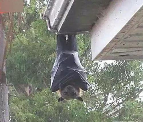 澳大利亚有多恐怖,看完你就知道了...