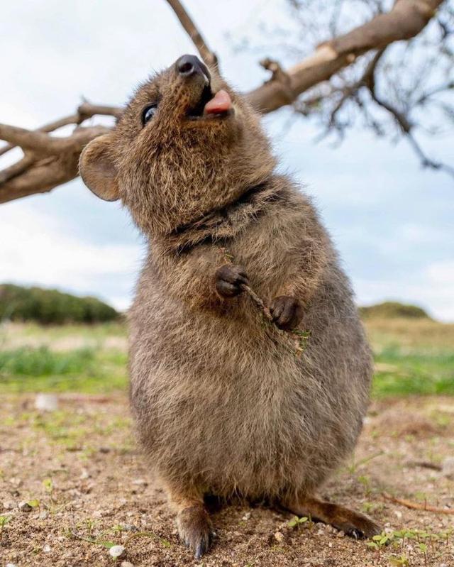 有什么你去了澳洲才知道的事情?12条关于澳洲的真相让你涨见识