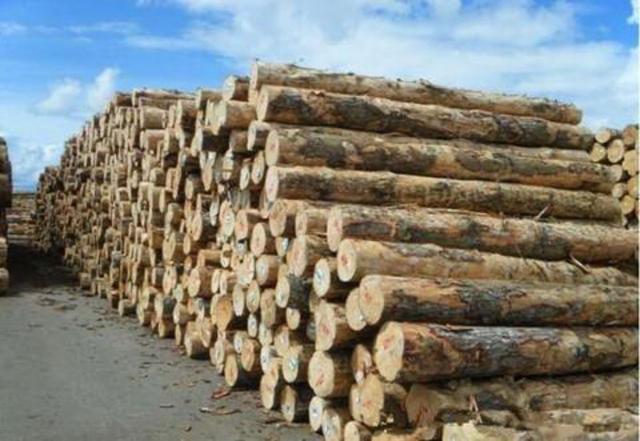 澳洲难了!中国刚宣布降税,澳六大州就失去了对华出口原木资格