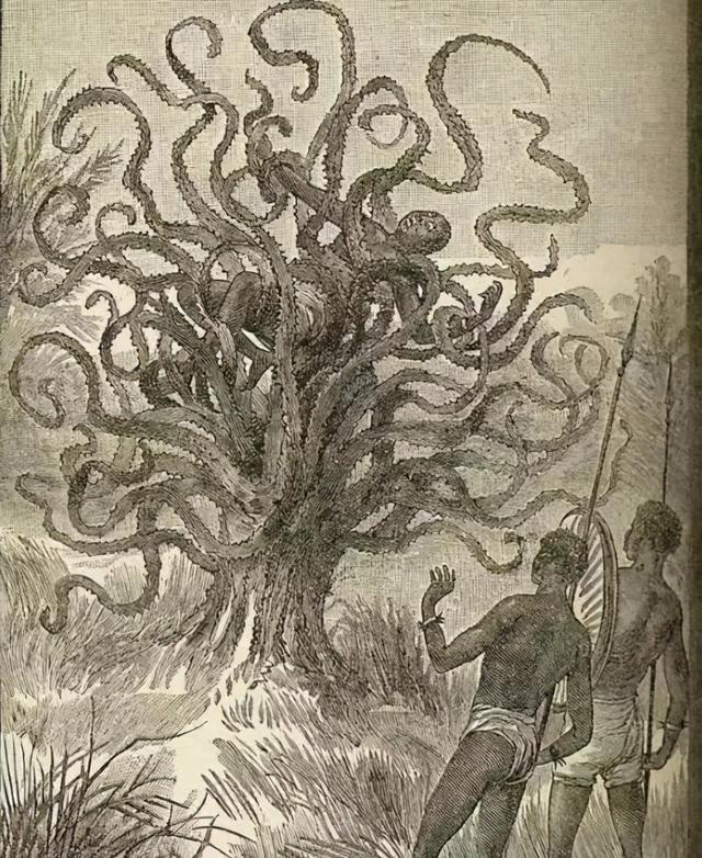 辟谣:印尼恐怖食人树,高八九米,专门捕食人类,吃人无数
