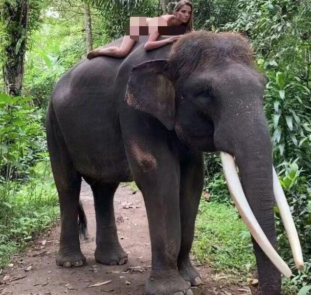俄罗斯网红在印尼神山拍不雅视频被通缉,步光身骑大象女模后尘