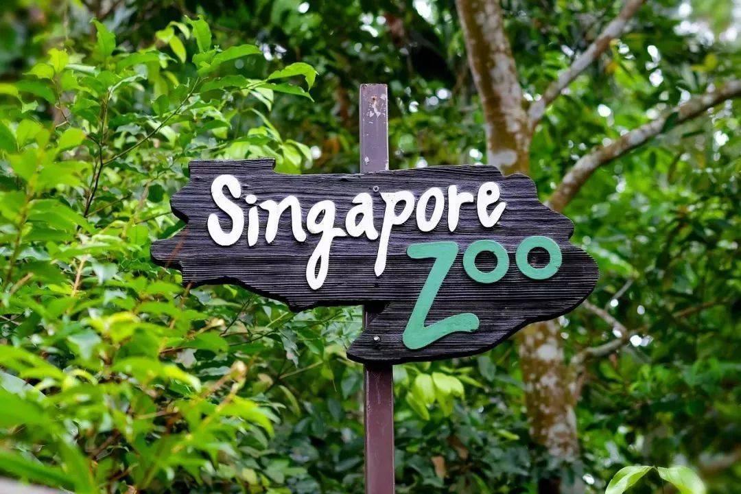 新加坡 养乐多除了原味,还有其他口味
