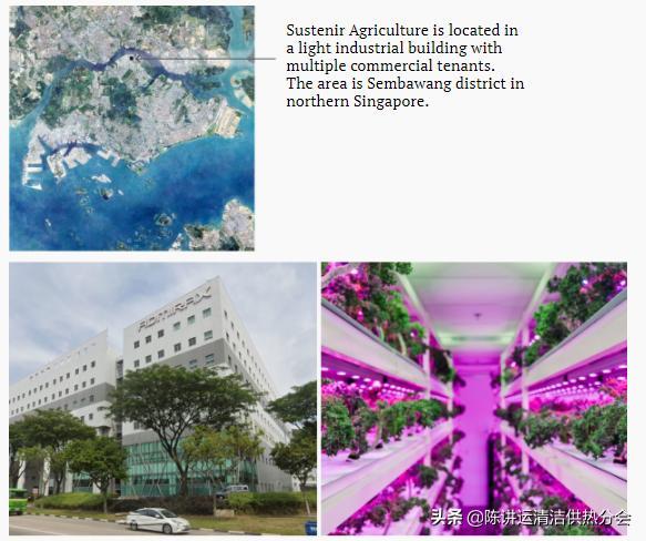 新加坡城市农场改善粮食安全的 3 种方式