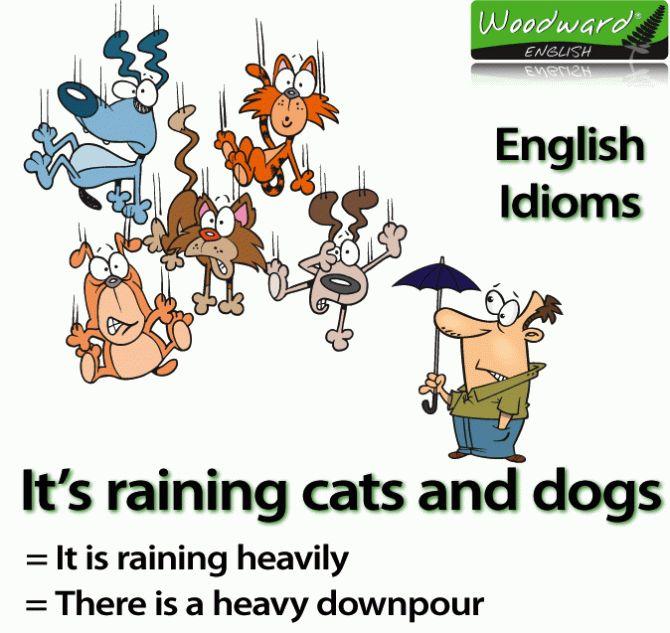 【1分钟英语涨知识】rain cats and dogs是什么意思?